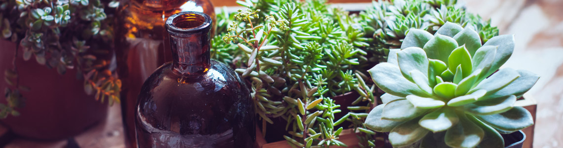 indoor plant gift baskets sydney