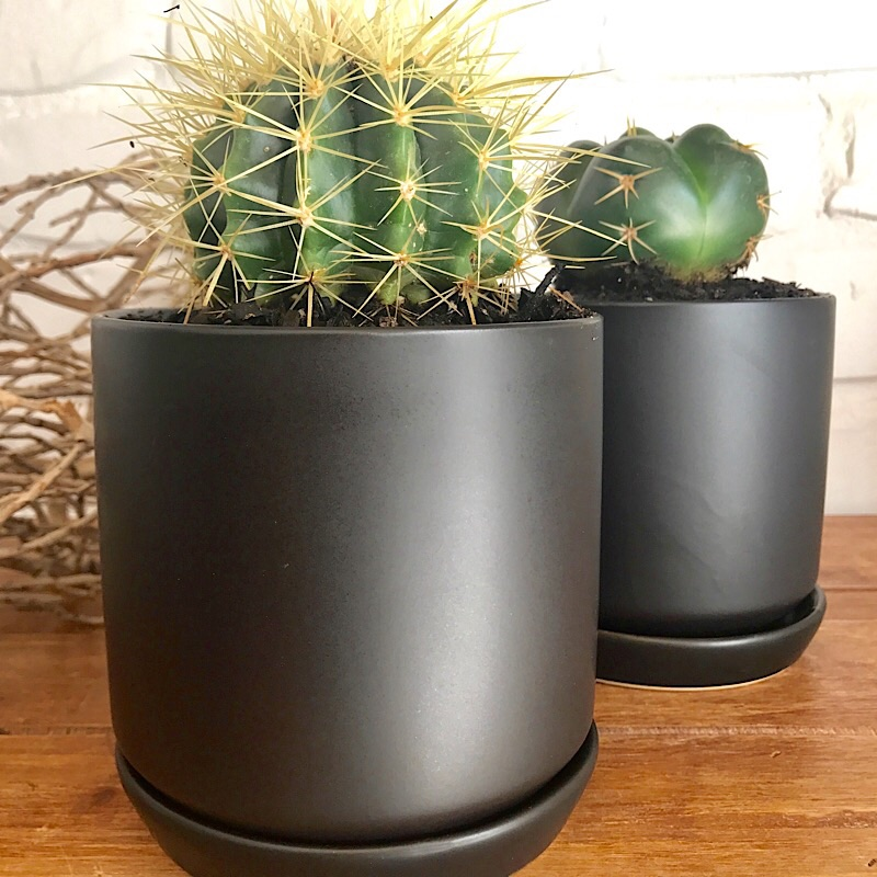 Christmas Gift Ideas Folium Indoor Plants And Gifts Sydney