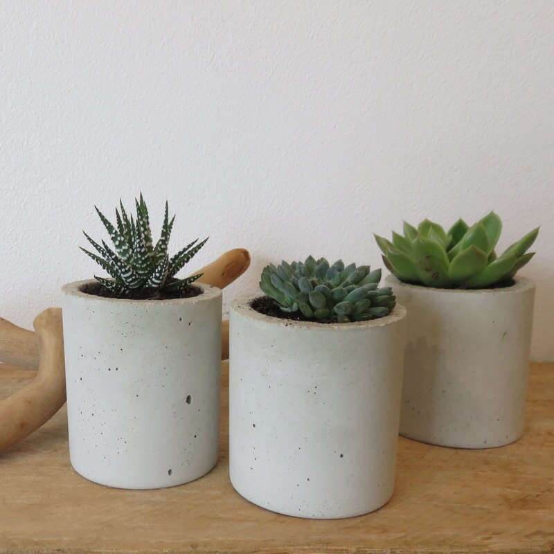 Christmas Succulent Gift Ideas.Christmas Gift Ideas Folium Indoor Plants And Gifts Sydney