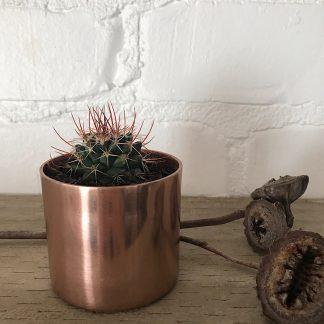 buy mini cactus online copper